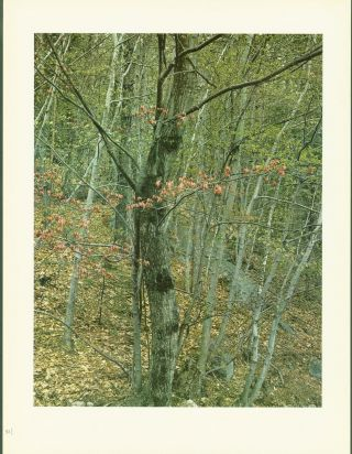 Color Lithographed Prints by Eliot Porter (10 color prints from the book 'In Wilderness Is the Preservation of the World').
